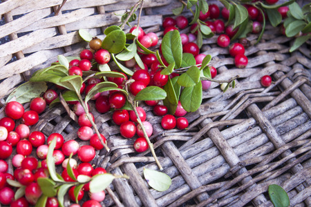 mountain cranberry: A pile of red Vaccinium vitis-idaea lingonberries, in a wicker basket Stock Photo