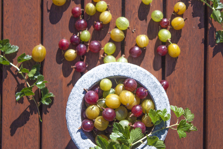 ribes: Green, red and yellow Gooseberries, ribes uva-crispa, in a stone bowl, on wooden ground