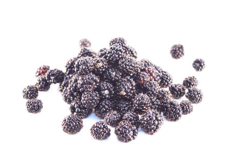 rubus: Rubus fruticosus, blackberry or bramble, isolated on white background