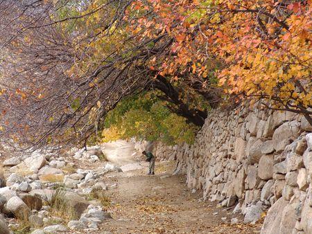 boor: Fall in Dehbala(Yazd) Stock Photo