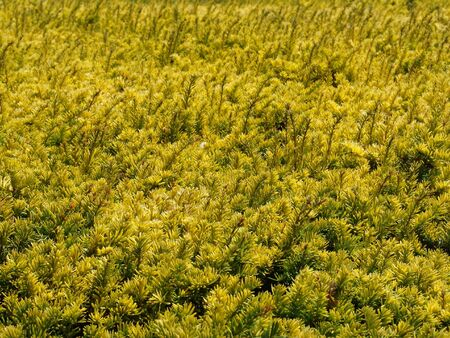 herbaceous: Herbaceous Pattern