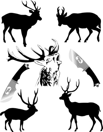 Silhouettes of deer of different species on a white background; Stock Vector - 8596332