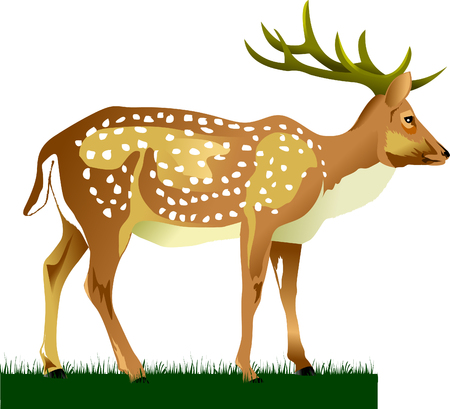 Royal deer on a green meadow (vector illustration); Stock Vector - 8596336