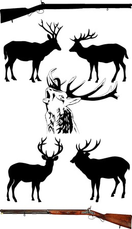 animals hunting: Silhouettes of deer of different species on a white background;  Illustration