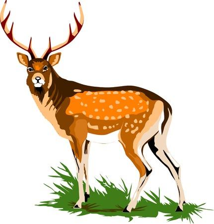 Ciervo real en un prado verde