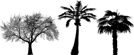 three black silhouettes of trees (vector illustration);  Vector