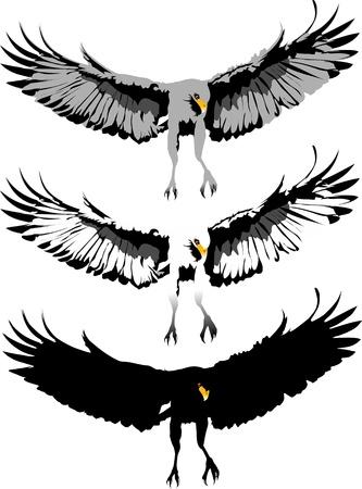 cross and wings: Garras de �guila. Tres opciones de color. Ilustraci�n de vector;