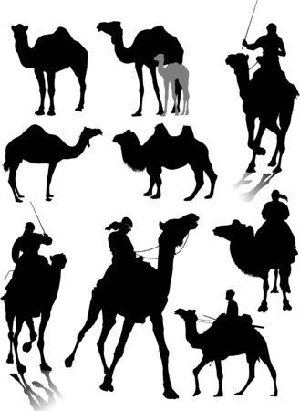 Sammlung von Silhouetten verschiedener Rassen von Kamelen Vektorgrafik
