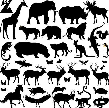 silueta tigre: siluetas de muchos de los animales del zoológico, ilustración vectorial; Vectores