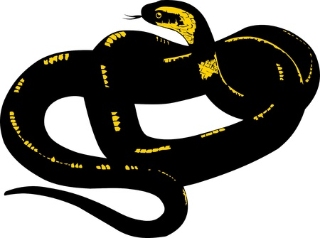 coiled: black snake with yellow stripes coiled ring  vector illustration