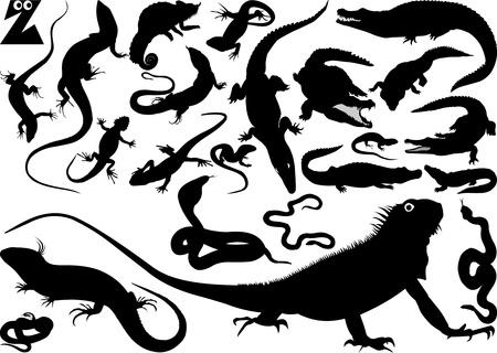 crocodile: Colección de siluetas de las serpientes, cocodrilos y lagartos ilustración vectorial;