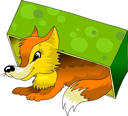 funny red fox crawled under the green box  illustration ;  Vector