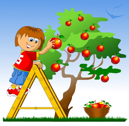 wooden stairs: little boy collects red apples  vector illustration ;