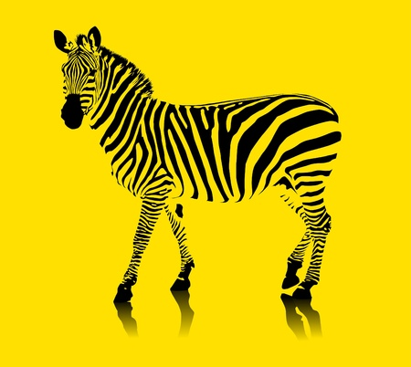 zebra black and white on a yellow background  vector illustration ;  Vector