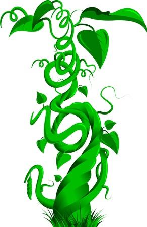 Illustrazione vettoriale di un gambo di fagiolo sulla fiaba Jack e il fagiolo magico