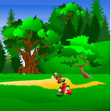 coniferous forest: Los bosques de con�feras, con luz natural, ilustraci�n vectorial Vectores