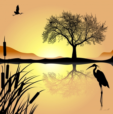 heron: crane and heron lake in the night; vector and illustration;