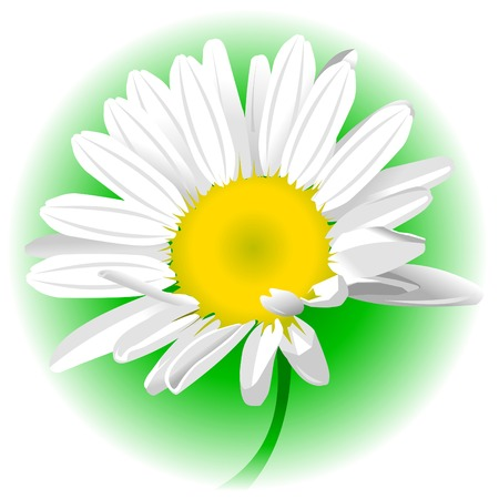 daisy vector: white daisy on green background, vector and illustration