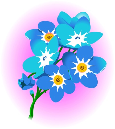 forget me not: blue forget-me-not on rose background, vector and illustration