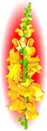 tone shading: Yellow snapdragon flower isolated on red background, vector Illustration