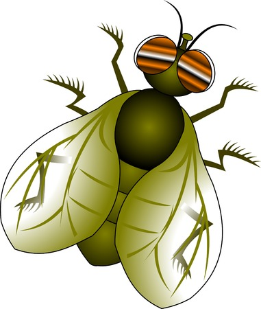 musca: green fly with orange eyes on a white background, vector and illustration