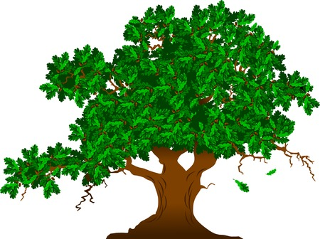 tree crown: large and high branching tree, vector and illustration