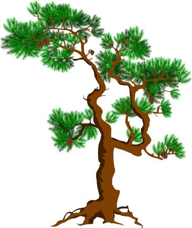 detached: pino individual con hojas sobre un fondo blanco Vectores
