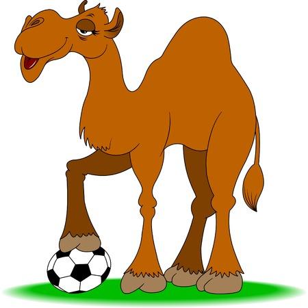 41757564-chameau-gaie-joue-au-football-sur-un-terrain-vert.jpg