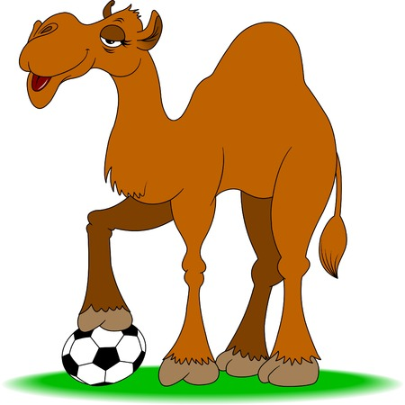 dryness: cheerful camel plays football on a green field Illustration