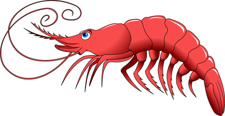 protein food: Cooked shrimp isolated on white photo-realistic vector illustration