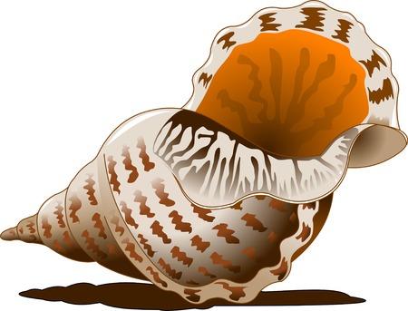 Seashell isolated on white background. Hand drawn doodle sea shell illustration Çizim