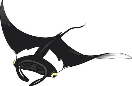 conserved: Black stingray on white background, vector and illustration