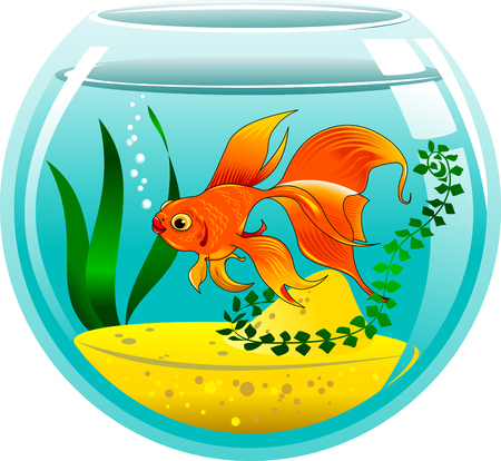 vesicle: golden fish in a small aquarium, vector and illustration