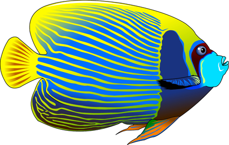 pomacanthus imperator: the figure shows the fish angelfish, vector Illustration