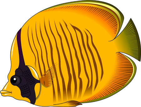 salt free: the figure shows the fish yellow butterfly fish, vector