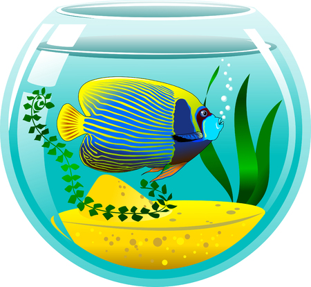 pomacanthus: angelfish in a small aquarium, vector and illustration