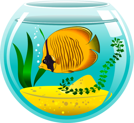 gill: yellow butterfly fish in a small aquarium, vector and illustration