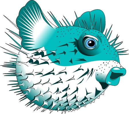 puffer fish: puffer fish,blow fish,cartoon vector image isolated on white background