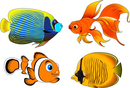 vesicle: collection of beautiful fish on a white background, vector and illustration
