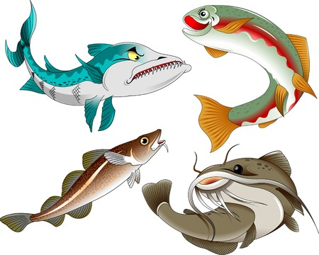 coho: collection of commercial fish on a white background,vector and illustration Illustration