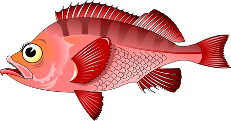 freshwater: Hand-painted watercolor illustration of a fish - freshwater perch