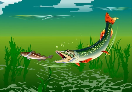 pike: huge pike attacks small fish, vector and illustration