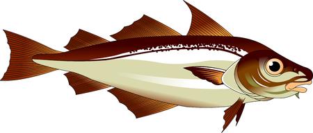 high quality haddock cartoon character include flat design