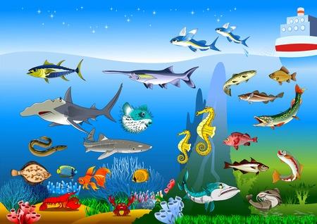 hammerhead shark: Vector de dibujos animados lindo diferentes peces conjunto aislado