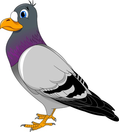 credulous: Carton funny pigeon. Isolated on white background