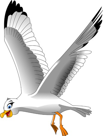 bird flying: Cartoon smiling seagull on white background, vector and illustration