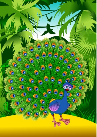 Beautiful peacock isolated on green background. Vector and illustration