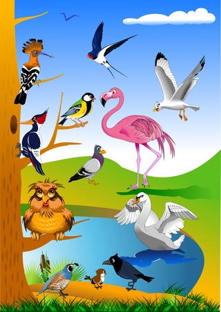 collection of birds in the forest near the green field, vector Ilustração