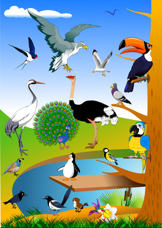 collection of birds in the forest near the green field, vector Illustration