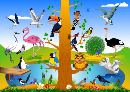 Verzameling van vogels in het bos in de buurt van het groene veld, vector